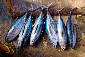 Fish is a good source of food