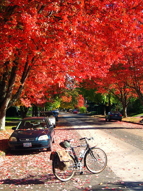 bicycle, fall color, Eugene Oregon, B-Stone CB-Zero, trees, leaves, red