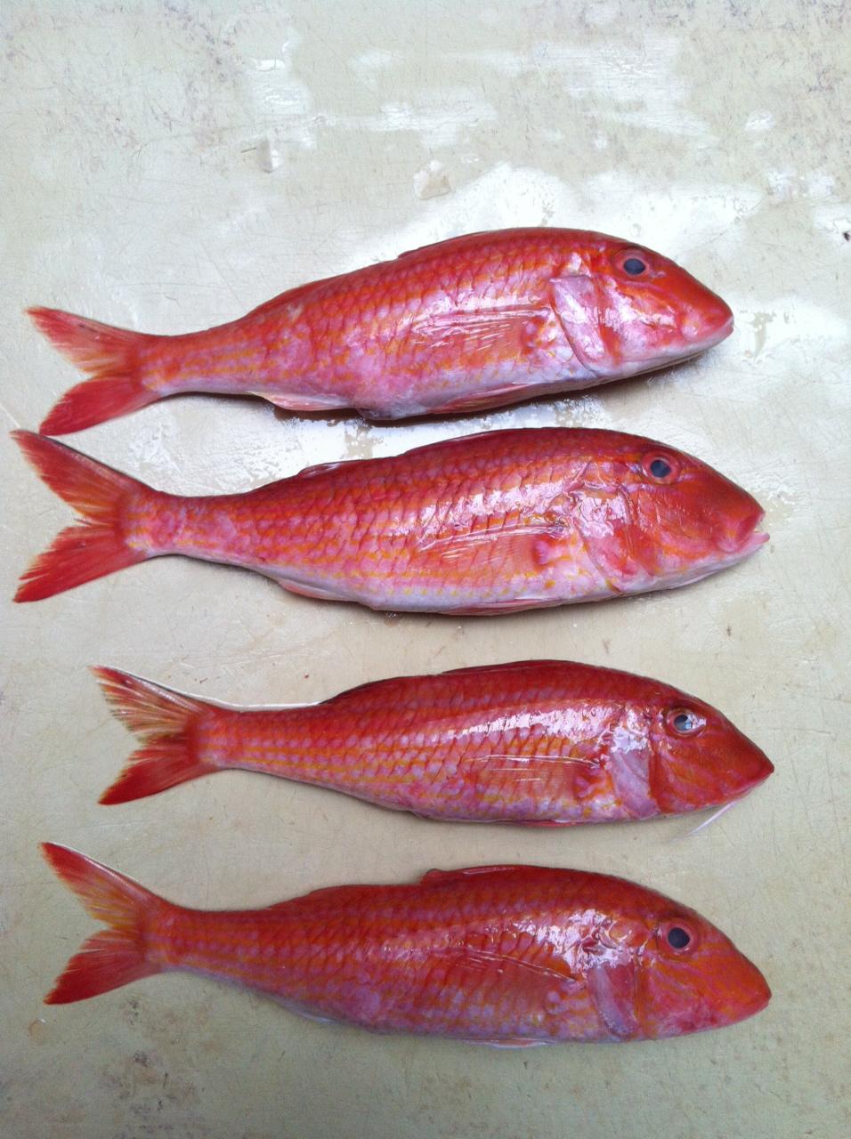 The edible ocean delicious little fish for Edible hawaiian fish