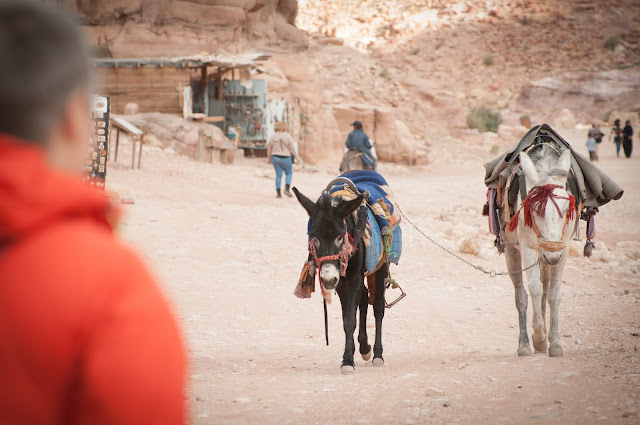 Save the donkeys in Petra, Jordan!