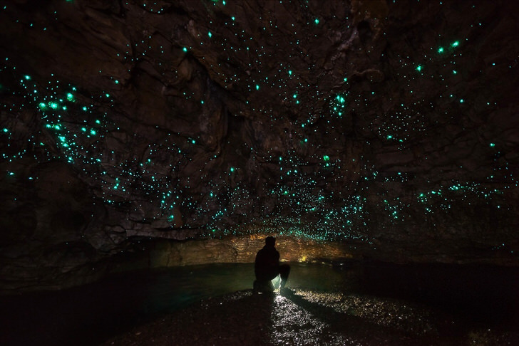 8 Things You Have to Do in New Zealand - Waitomo Caves