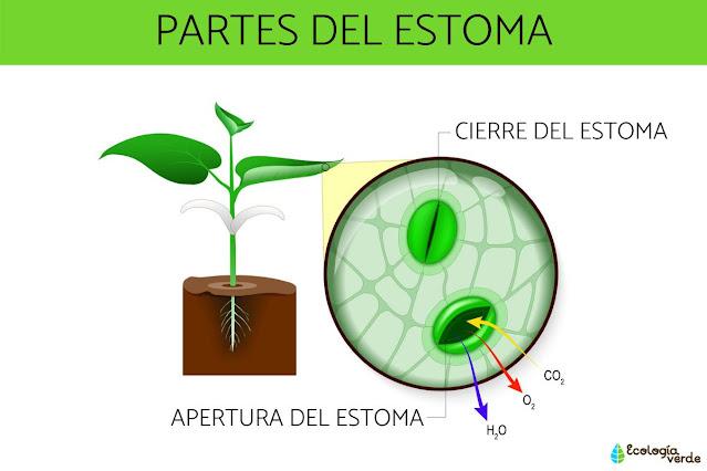 Clasificación de PLANTAS respecto a los requerimientos de LUZ
