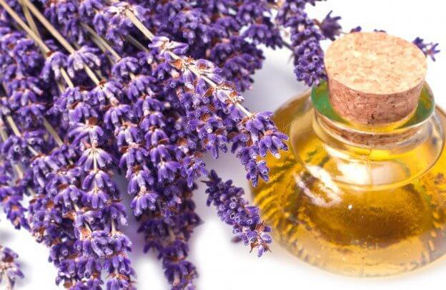 dầu lavender