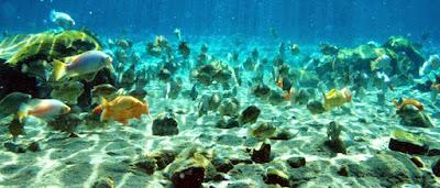 Wisata Air Umbul Ponggok, Tempat Paling Asik Untuk Berenang