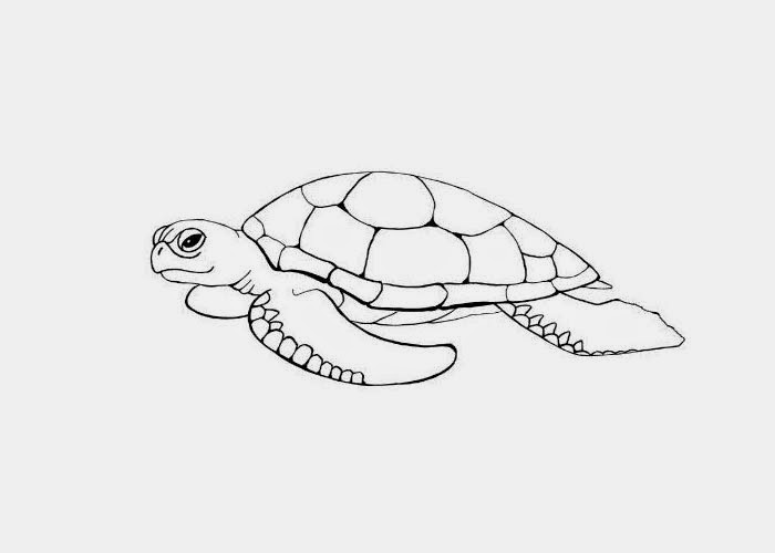 Free Sea Turtle Coloring Pages Printable, Download Free Clip Art ... | 500x700