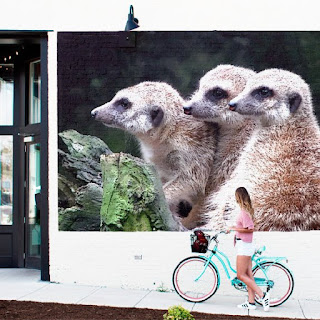 Meerkats did social networking before it was cool. Deal with it.