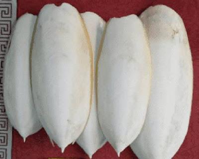 Tulang Sotong Untuk Kenari