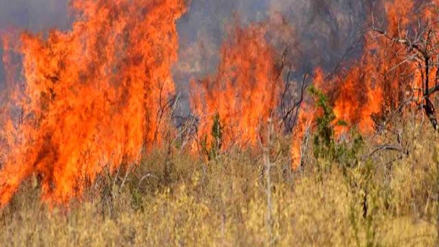 Αργολίδα: Υψηλός κίνδυνος πυρκαγιάς την Κυριακή 6 Σεπτεμβρίου