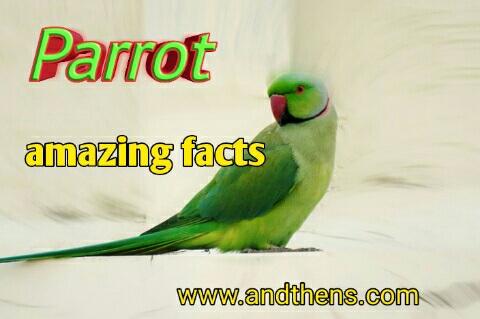 parrot information in hindi - तोते के बारे में 25 Amazing जानकारी हिंदी में