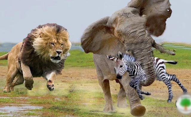 «Лапа помощи» — как животные спасают друг друга. Несколько случаем заснятых на камеру