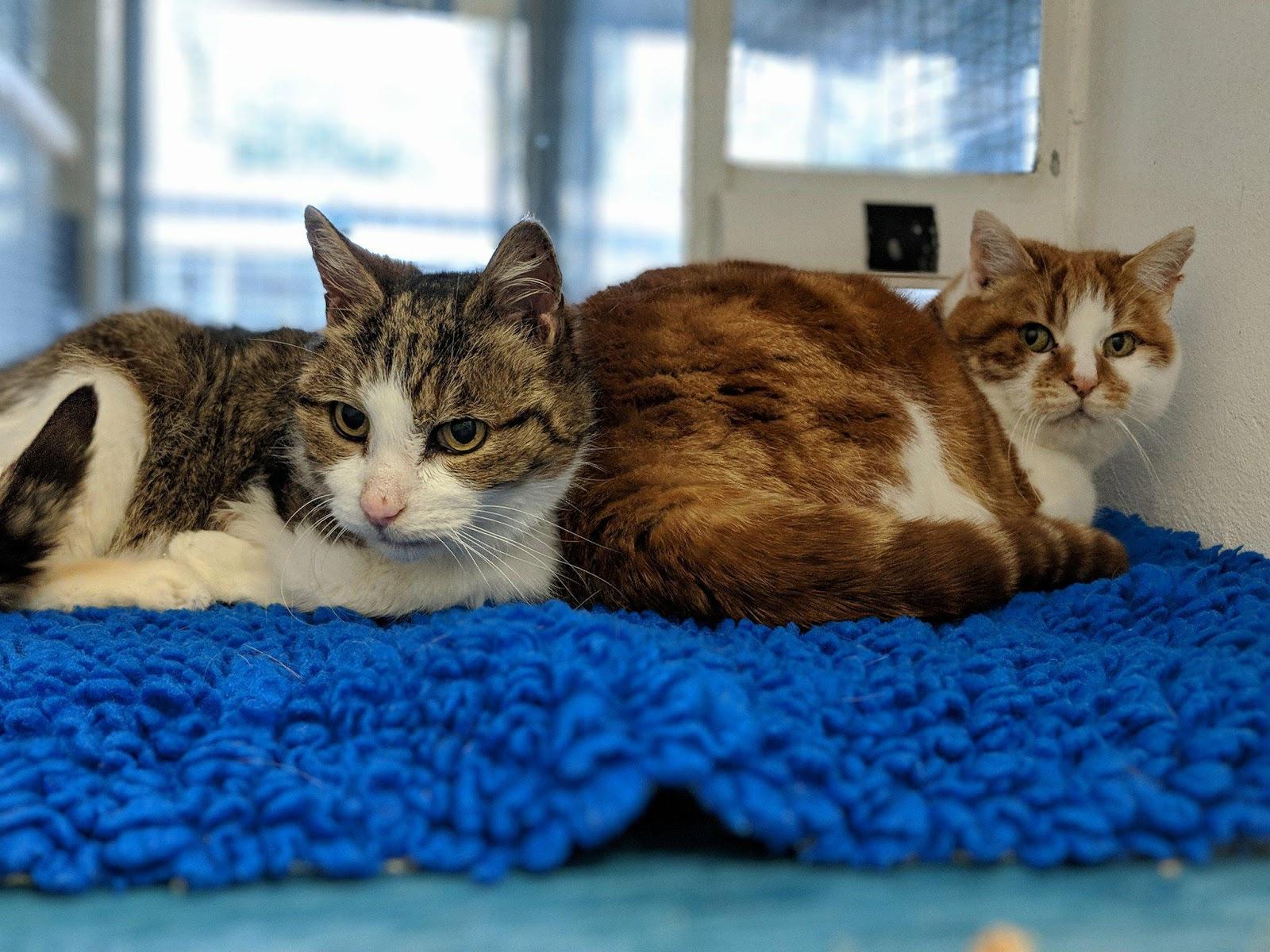 Birmingham Cat Adoption Centre