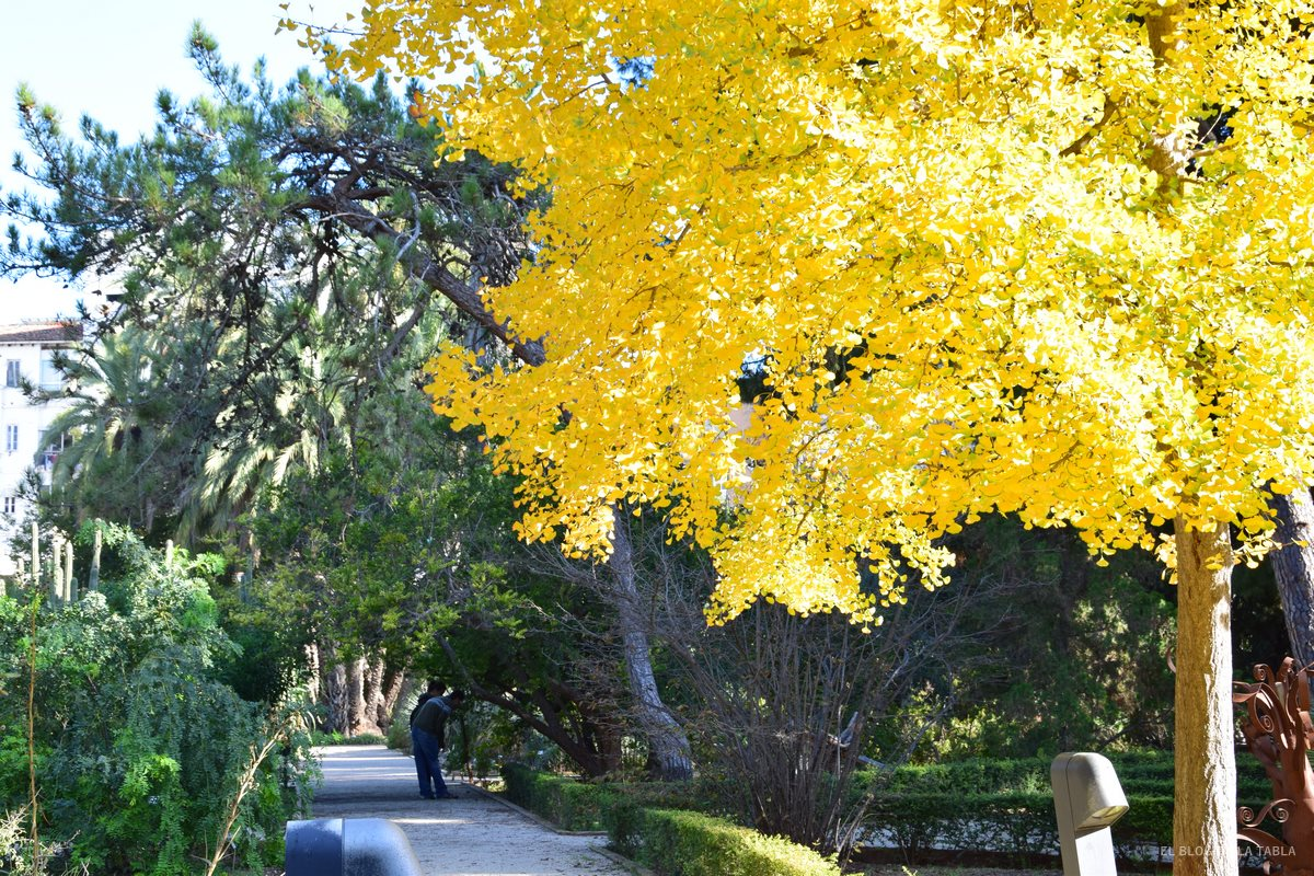 jardín botánico y ginkgo biloba