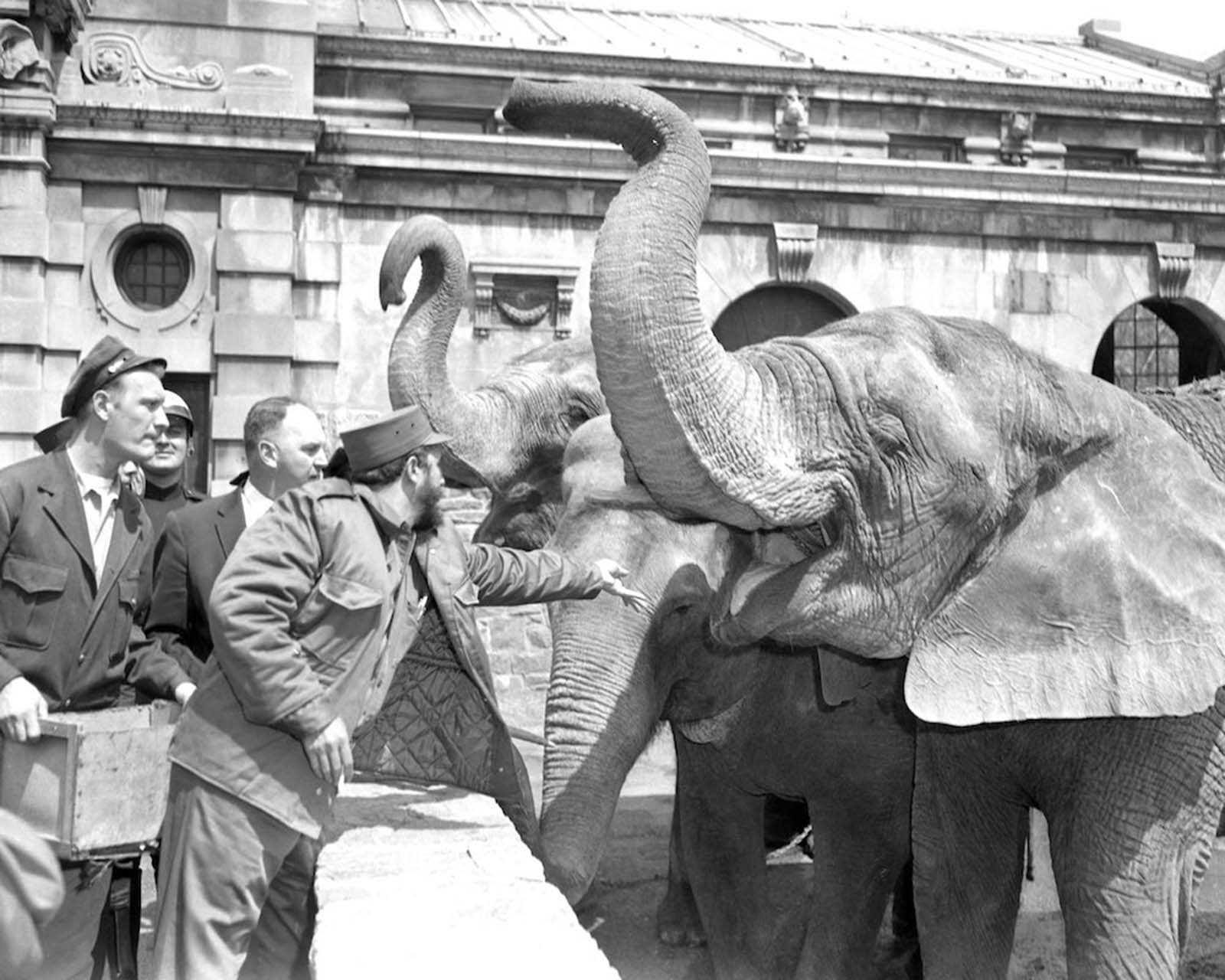 Castro tosses a peanut to an elephant at the Bronx Zoo.