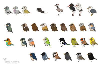 Este es el total de aves observadas durante el confinamiento. Un total de 31 sps