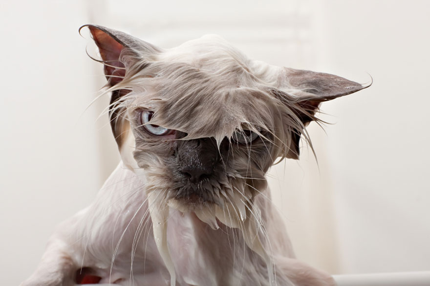 funny-wet-cats