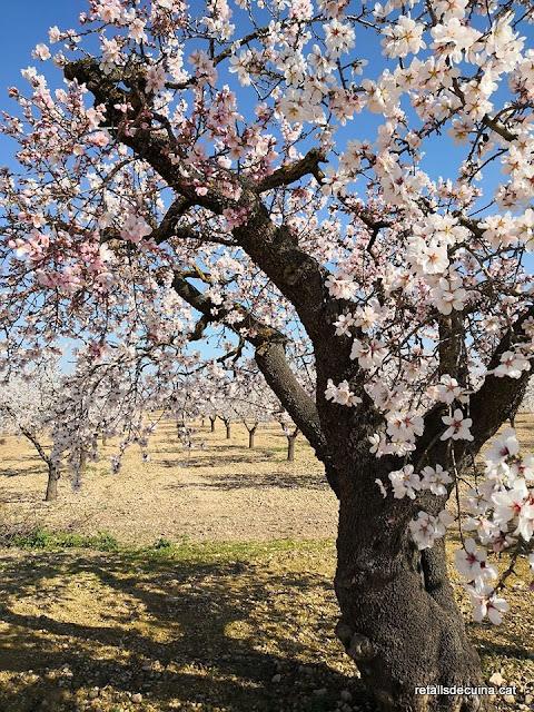Les Garrigues en Flor: Passejant entre ametllers florits