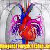 Lebih Mengenal Penyakit Katup Jantung Bocor Secara Menyeluruh