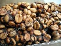 inilah foto raw beans prongkolan kopi luwak asli campur kotoran