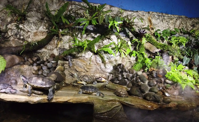 Kura kura monster aquarium cimory riverside bogor