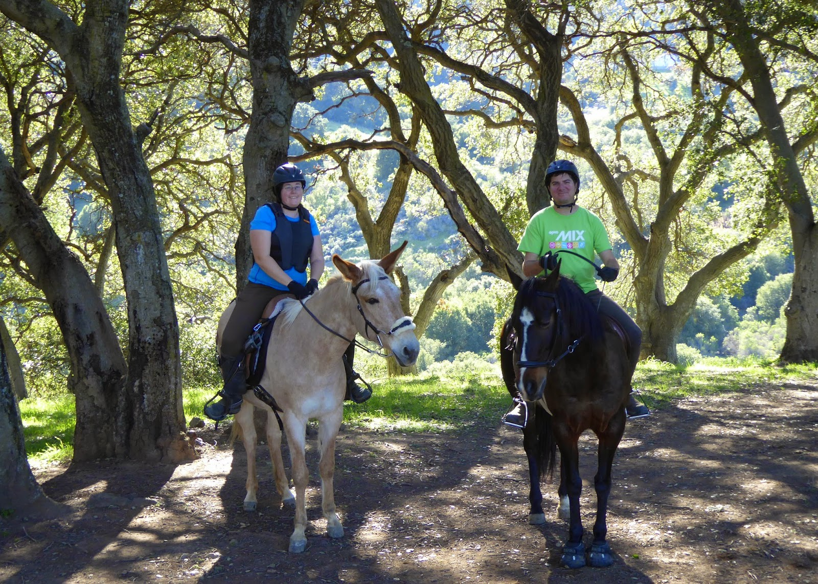 Winery Ride and Treeless Saddle Trial – DIY Horse Ownership