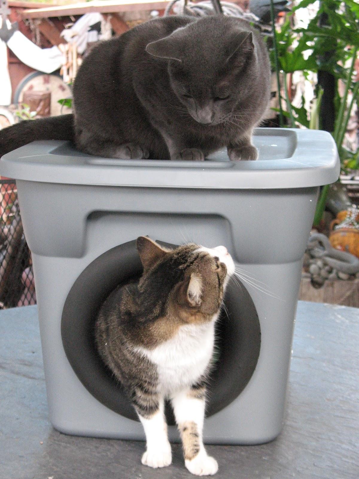 Artsy Fartsy Outdoor Cat Bed For Winter