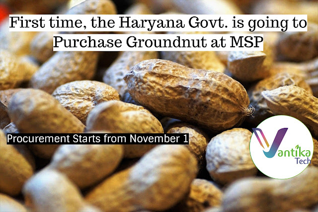 purchase Groundnut at MSP:MSP of Groundnut in Haryana: Mandi names for groundnut