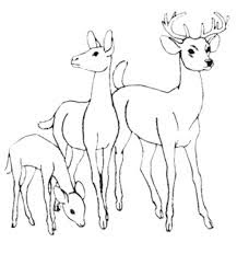 Deer and fawn coloring pages For Print Online