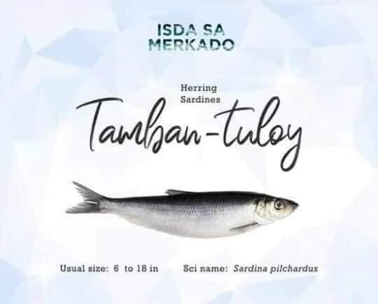 Isda Tamban - tuloy (Herring Sardines)