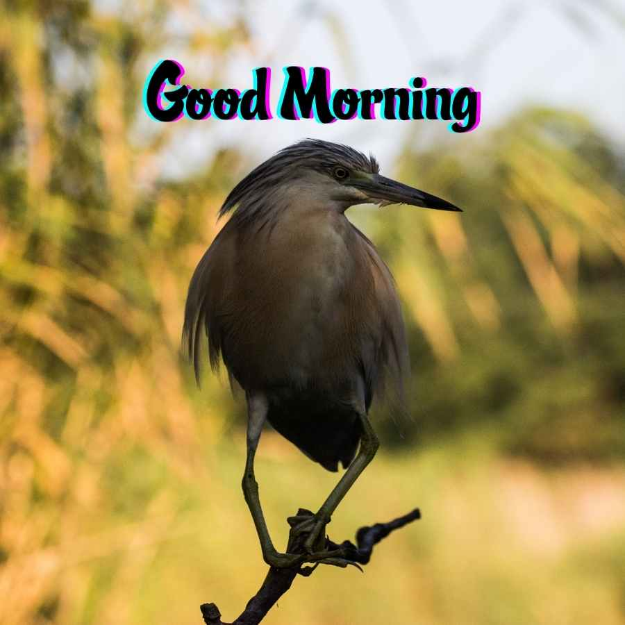good morning hubby images