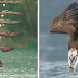 Photographer Captures Incredible Photos Of Osprey in Mid-Hunt Dive