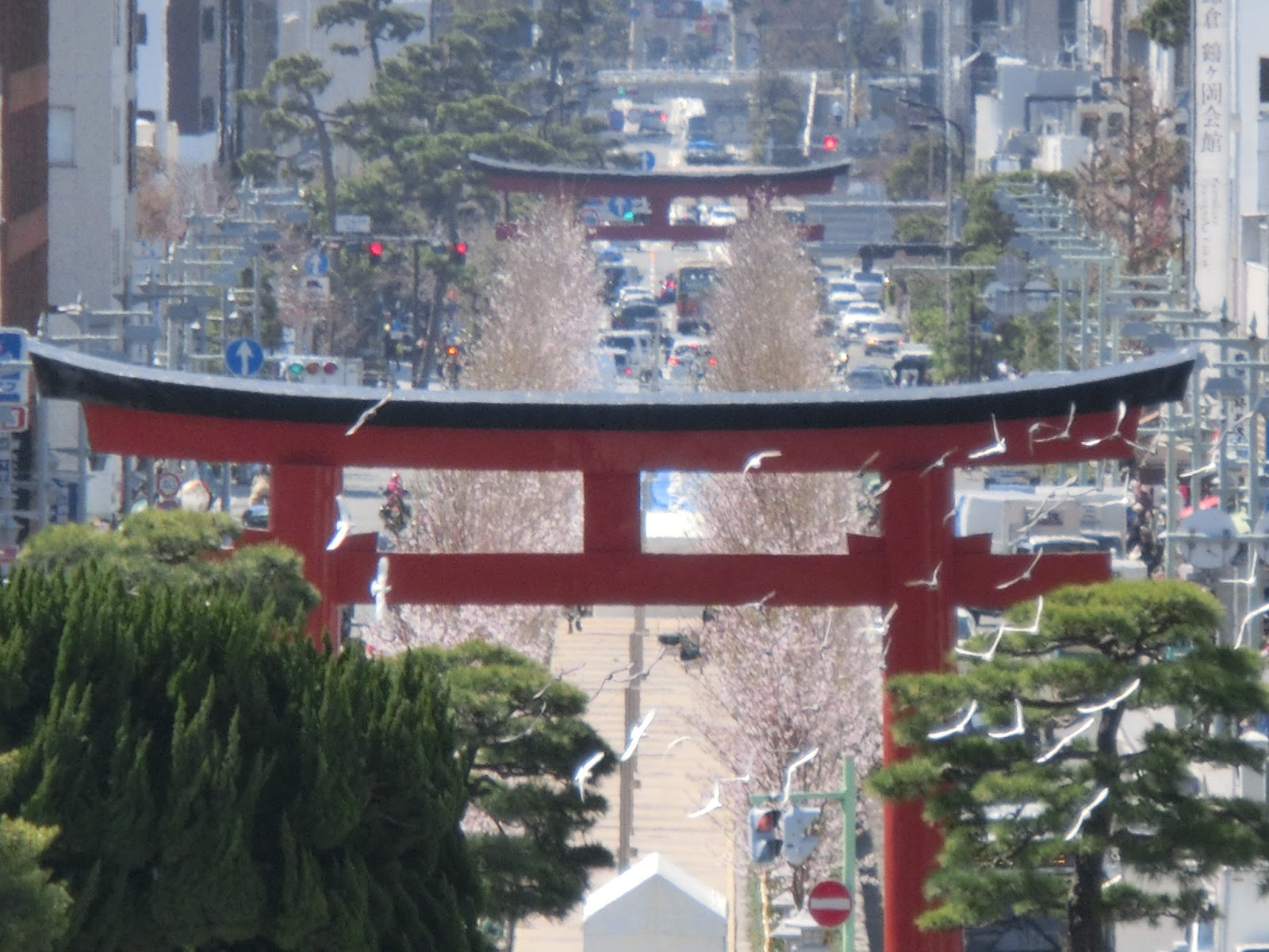 okadoのブログ~鎌倉散策の記録~: 今日は・・・鶴岡八幡宮の参道・段葛の竣功式2016/03/30