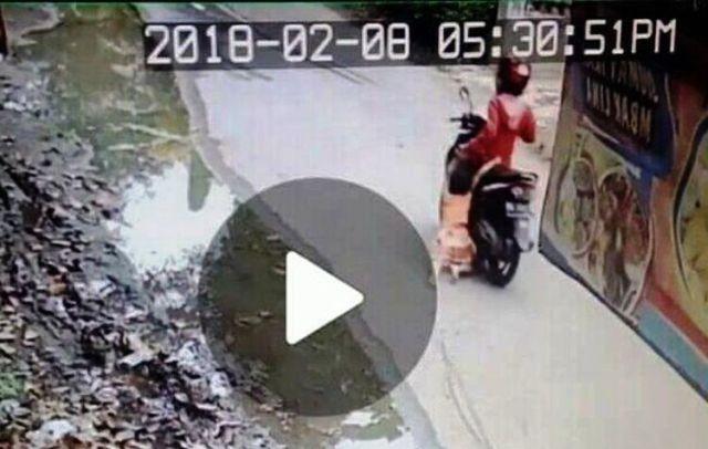 Viral, Ibu Seret Anaknya Menggunakan Motor