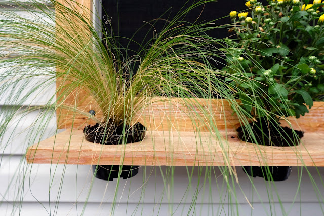 cedar wood box plant