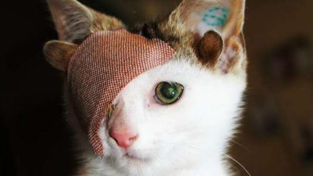 Buongiornolink - Frankie il gattino con quattro orecchie ed un solo occhio