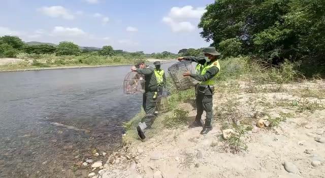hoyennoticia.com, Liberados 50 canarios en zona rural de Riohacha