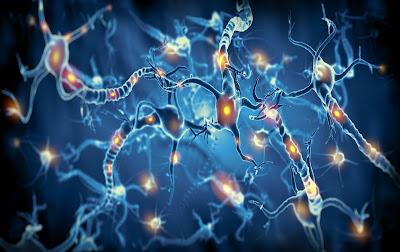 Células nerviosas activas