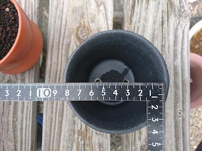 直径8センチ