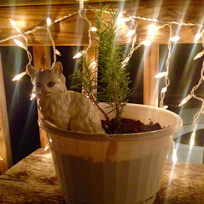Potted Rosemary in Herbal Container Garden with White Ceramic Kitty Decoration