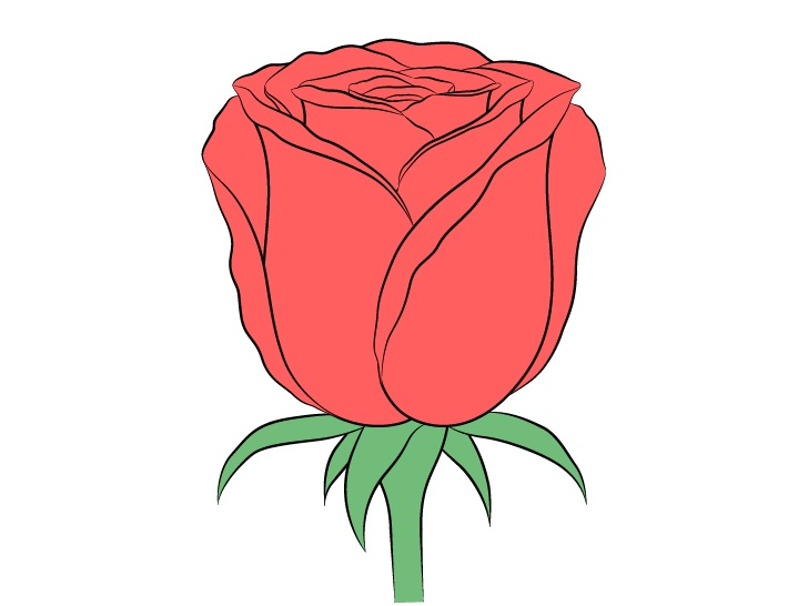 Gambar warna bunga mawar