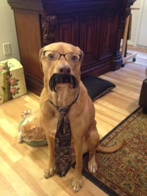 funny golden retriever dog mustache picture