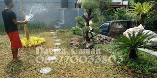 Tukang Taman Minimalis Cibinong Bogor