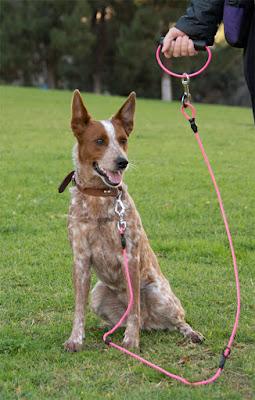 Bite-proof unbreakable dog leash