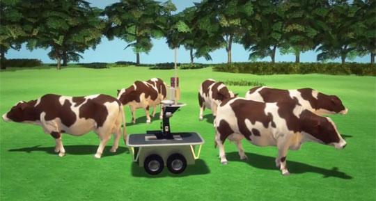 Shepherding And Herding