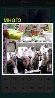 много кошек пришло чтобы их покормили около дома 667 слов 6 уровень