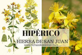 hiperico