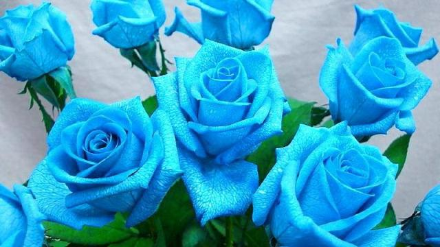 Pretty Blue Flower Pictures
