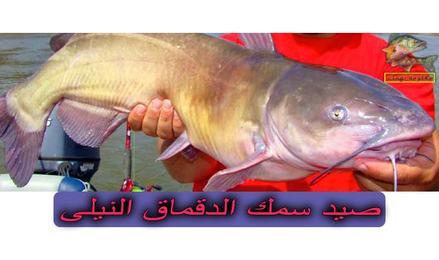 صيد سمك الدقماق النيلي | أسماك الدقماق فى مصر