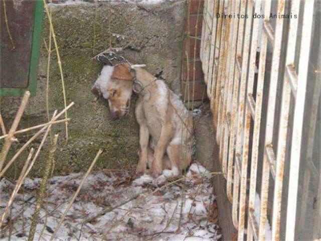 Изображение щенка, которого нашли застывшим и мертвым, навсегда останется символом зла человеческого сердца.