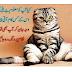 Billi ki malumat | Bili ki monch | What good is a cat's mustache?
