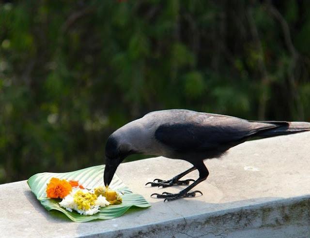 kaag tihar | crow festival in Nepal